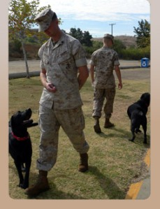 Freedom Dogs, Freedom Service Dogs, Service Dogs for the military, Beth Russell, Military Mom Talk Radio